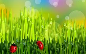 Картинка трава, капли, божья коровка