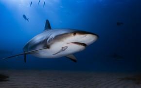 Обои акула, вода, океан