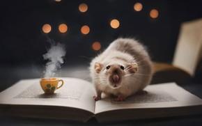 Картинка кофе, книга, крыска, кружечка, ночное чтение