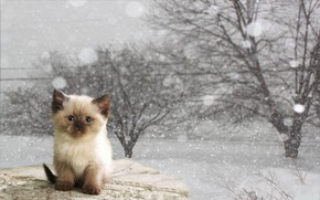 Обои зима, кот, котёнок