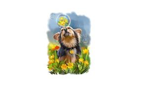Картинка цветы, пузыри, собачка