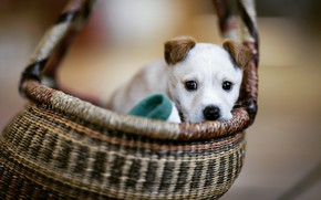 Картинка корзина, собака, щенок