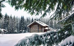 Обои House, Winter, Snow, Trees, Spruce, Pine, Needles