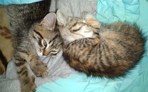 Картинка котята, милашки, спят, meduzanol ©