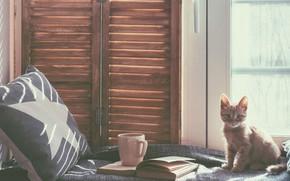 Обои кот, книга, кровать, подушка, котёнок, окно, кружка, комната, кошка