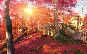Обои лес, осень, Украина, Закарпатье, листья, мох, деревья, горы, камни, солнце