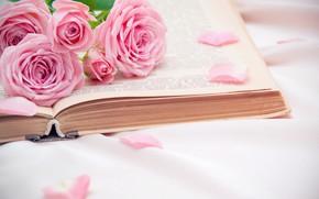 Картинка розы, лепестки, книга