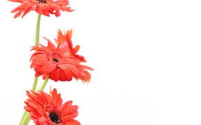 Картинка цветы, букет, Flowers