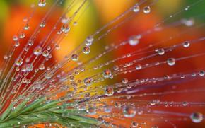 Обои красота, макро, ассоциации, отражение, растения, природа, вода, фантазии, капли