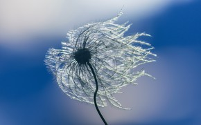 Картинка природа, ветер, былинки