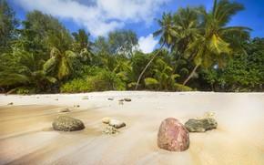 Картинка песок, пляж, лето, природа, тропики, побережье