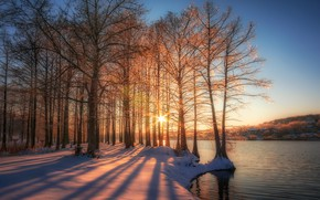 Картинка солнце, снег, деревья
