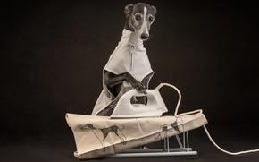 Картинка собака, утюг, глажка