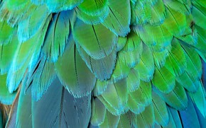 Картинка перо, перья, Background, feather, card