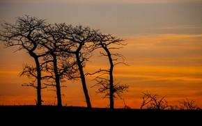 Картинка деревья, силуэт, зарево