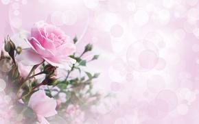 Картинка цветы, коллаж, розы, боке