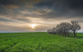 Картинка поле, деревья, вечер