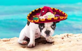 Обои взгляд отдых Мексика, французский бульдог, лето, bulldog, wallpaper., боке, beautiful background, щенок, сомбреро, пляж песок ...