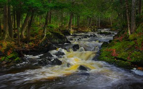 Картинка лес, деревья, река, Мичиган, Michigan, Kakabika Falls, Водопады Какабика