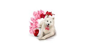 Картинка цветок, собака, белая, сердечко, орхидея