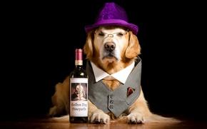 Картинка бутылка, собака, шляпа