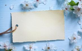 Картинка цветы, весна, яблоня, wood, blue, blossom, flowers, spring