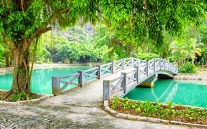 Обои зелень, деревья, ветки, пруд, парк, листва, Вьетнам, мостик, Province, Ниньбинь, Ninh Binh