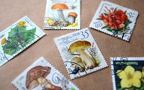 Картинка цветы, грибы, разное, широкоформатные, марки