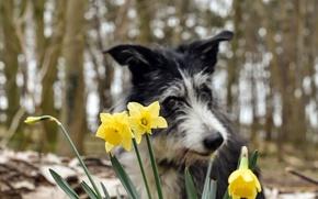 Картинка цветы, фон, собака