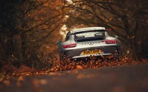 Обои дорога, листья, 911, Porsche, Порше, GT3