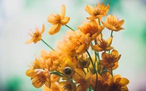 Картинка цветы, настроение, минимализм, букет, minimalism, flowers, mood