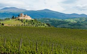 Картинка Italy, art, Tuscany, masterpiece, red wine, bottled art, bottled poetry, poetry, Denominazione di Origine Controllata …