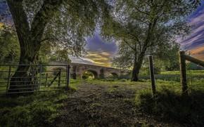 Обои Мост, Природа, Деревья