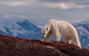 Картинка пейзаж, горы, природа, камни, скалы, белый медведь