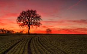 Картинка поле, дерево, зарево