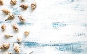 Картинка ракушки, summer, beach, wood, marine, seashells