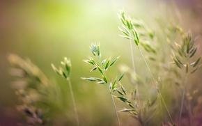 Картинка лето, трава, макро, свет