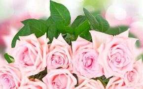 Картинка розы, букет, pink, flowers, roses, розовые розы