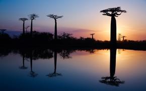 Картинка вода, деревья, отражение, утро, Африка, баобабы