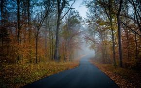 Картинка дорога, осень, Деревья, Лес