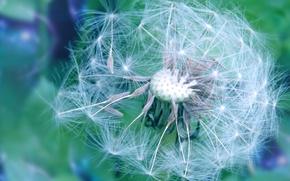 Картинка цветы, одуванчик, весна