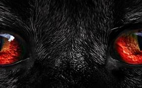 Картинка black, red eyes, Fur