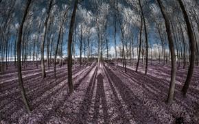 Картинка деревья, цвет, тени
