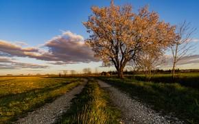 Картинка дорога, небо, Франция, миндальное дерево