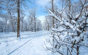 Обои зима, снег, парк, деревья