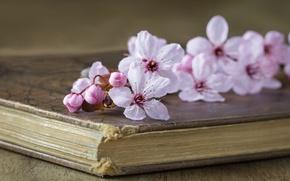 Картинка вишня, стиль, книга, цветки, ветка вишни
