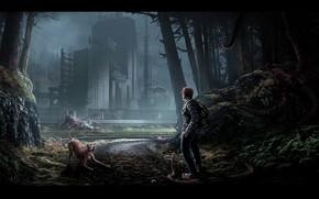 Картинка дорога, лес, собака, сооружение, THE LAB