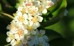 Картинка солнце, макро, весна, красиво, цветение, зелень листьев, цветение дерева