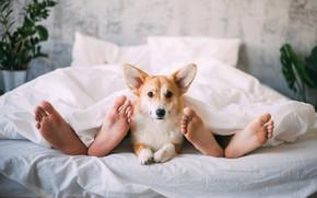 Обои ноги, собака, постель
