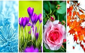 Картинка листья, цветы, рендеринг, времена года, коллаж, картинка, лерестки